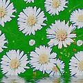 Raining White Flower Power by Pepita Selles