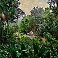 Rainy Day At Bok Garden by Georgianne Giese