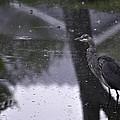 Rainy Day by Image Takers Photography LLC - Carol Haddon