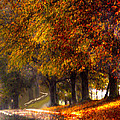 Rainy Day Path by Lesa Fine