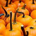 Rainy Day Pumpkins by Ira Shander