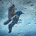 Rainy Day by Steven Michael