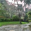 rainy Kerala  by Shiyad  K k