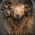 Ram Portrait by Randall Nyhof