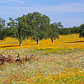 Ranch And Wildflowers And Old Implement 2am-110556 by Andrew McInnes