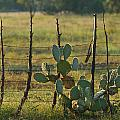 Ranch Cactus by Sean Wray