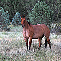 Ranch Horse Young Arizona by Tom Janca