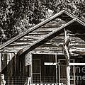 Ranch House Very Old In Antique Sepia 3011.01 by M K Miller