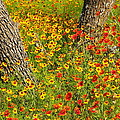 Ranch Wildflowers And Trees 2am-110522 by Andrew McInnes