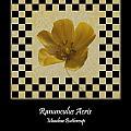 Ranunculus Buttercup Wild Flower Poster 1 by Barbara St Jean