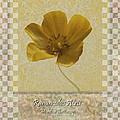 Ranunculus Buttercup Wild Flower Poster 3 by Barbara St Jean