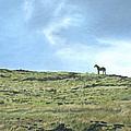 Rapa Nui Horse by Brent Charbonneau