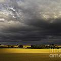 Rapefield Under Dark Sky by Heiko Koehrer-Wagner
