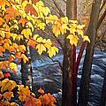 Rapids by Brenda Loschiavo