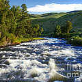 Rapids In Yellowstone by Thomas Levine