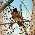 Raptor Perched by Bobbee Rickard