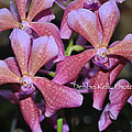 Rare Orchids by Debbie Kelly