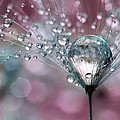 Rasberry Sparkles by Sharon Johnstone