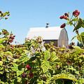 Raspberry Farm by Jackie Follett