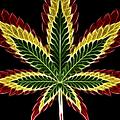 Rasta Marijuana by Adam Romanowicz