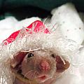 Rat Elf by Art Dingo