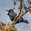Raven by Alan Toepfer
