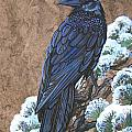 Raven Chillin by Anne Shoemaker-Magdaleno
