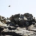 Raven Flying Over Tafoni by Studio Janney