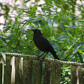 Raven In The Wild by Bill Cannon