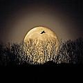 Raven Moon by Pekka Sammallahti