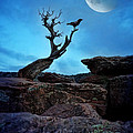 Raven On Twisted Tree With Moon by Jill Battaglia