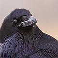 Raven Portrait by Mircea Costina Photography
