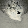 Raven Reflection by Cambion Art