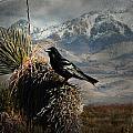 Raven Storm by John Forrey
