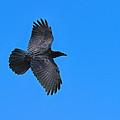 Raven by Tony Beck