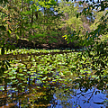 Ravine Gardens - A Different Look At Florida by Christine Till