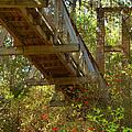 Ravine State Gardens Palatka Florida by Christine Till