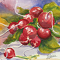 Ravishing Radishes by Elaine Allen