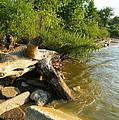 Raw Lake Erie Shore by Kathy Barney