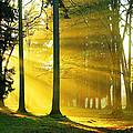 Rays Of Sun by Ingrid Smith-Johnsen