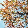 Reaching Autumn by Jamie Johnson