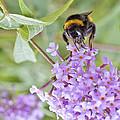 Reaching For Nectar by Maj Seda
