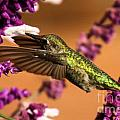 Reaching For The Nectar by Adam Jewell
