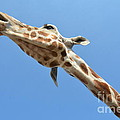 Reaching For The Sky by Randy J Heath