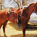 Ready For Some Ropin by Shannon Story