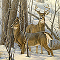 Ready - Whitetail Deer by Paul Krapf