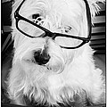 Really Portait Of A Westie Wearing Glasses by Edward Fielding