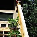 Rear Entrance by Barbara S Nickerson