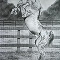 Rearing Horse by Jodi Bauter