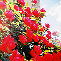 Recesky - Bright Roses by Richard Reeve